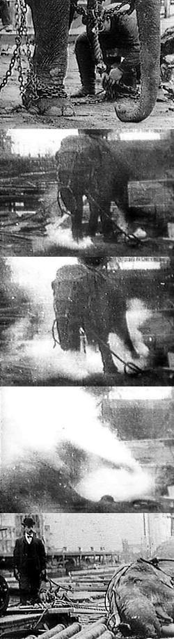 Autors: Fosilija Nāvessoda izpilde zilonim