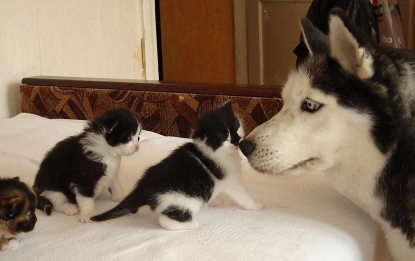 Arī ar Kates grēku darbiem... Autors: zobusāpes Apgāžam pieņēmumus... jeb ''Kā suns ar kaķi
