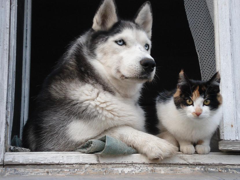 Un scaronādu bildi var redzēt... Autors: zobusāpes Apgāžam pieņēmumus... jeb ''Kā suns ar kaķi