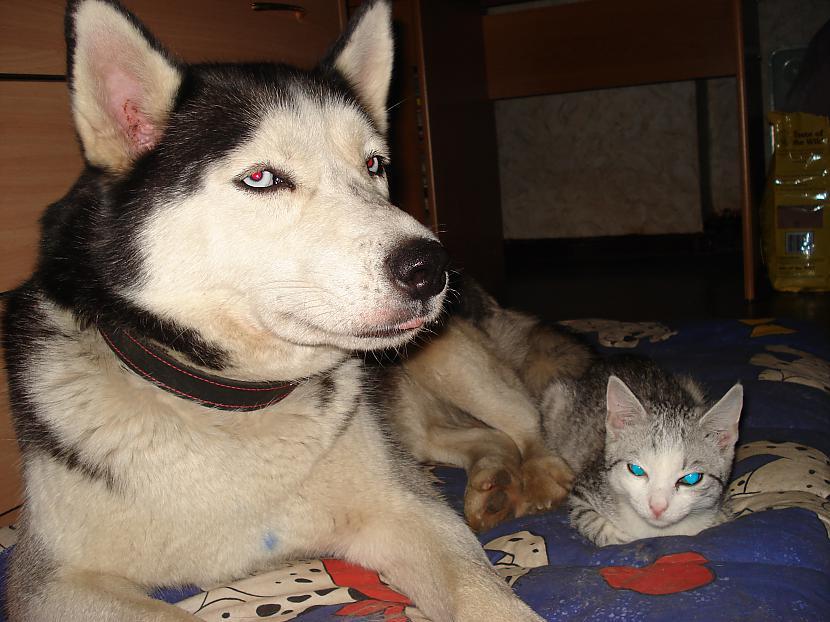Pēc rotaļām varēja likties uz... Autors: zobusāpes Apgāžam pieņēmumus... jeb ''Kā suns ar kaķi