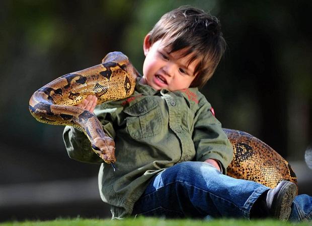 Autors: R1DZ1N1EKS Pats jaunākais čūsku savaldītājs.