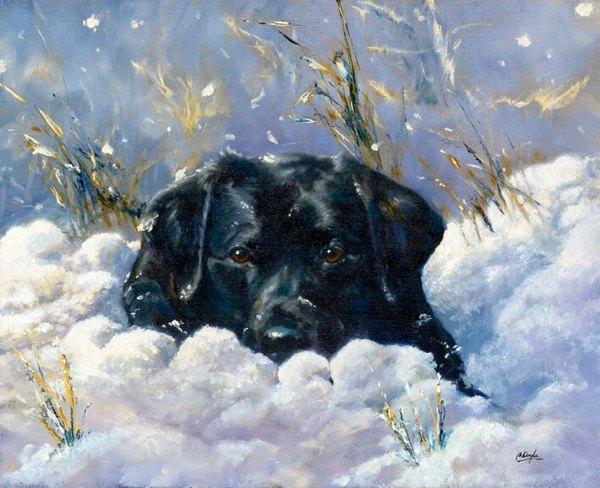 Mājas suns izdzīvo Aļaskas... Autors: Karalis Jānis Viņi izdzīvoja ziemā - stindzinošos apstākļos!!!