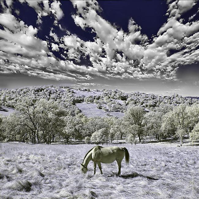 A single horse eating in the... Autors: Politikānis Kreatīvi interesantas bildītes!