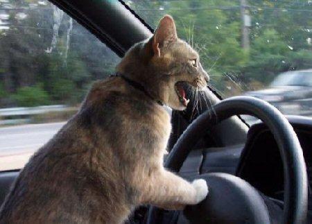 Kaķi spēj mērot ļoti lielus... Autors: Kaprālis Fakti par kaķiem