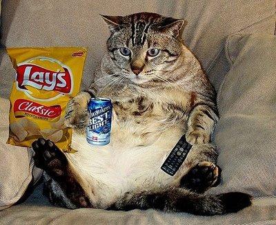 Nedrīkst sajaukt dabīgo un... Autors: Kaprālis Fakti par kaķiem
