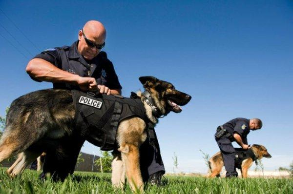 četrus gadus vecs suns... Autors: littlemonster19 Drosmīgs policijas suns.
