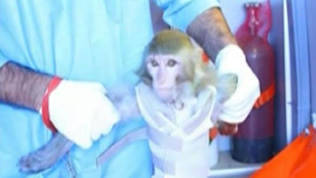Irānā kāds zinātnieks... Autors: Politikānis Palaiž kosmosā pērtiķi?!