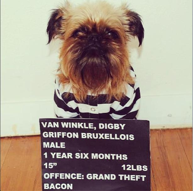 Autors: luvazhels Instagrammas Stilīgākais Suns