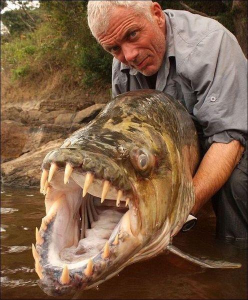 Autors: inpaCT Nelāgs radījums Kongo upē