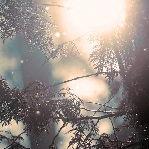 Autors: Jangbi December #6