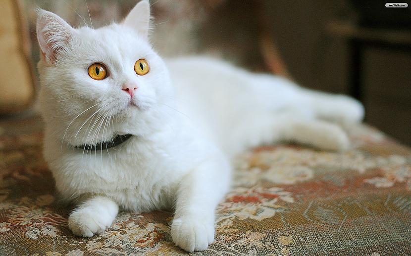 Gadās lasīt nbspstāstus... Autors: Raziels Par ko kaķi zina, bet nerunā