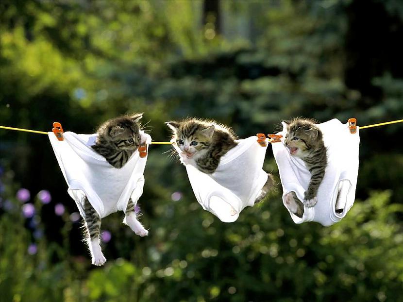Autors: catgrumpy daži gifi un bildites