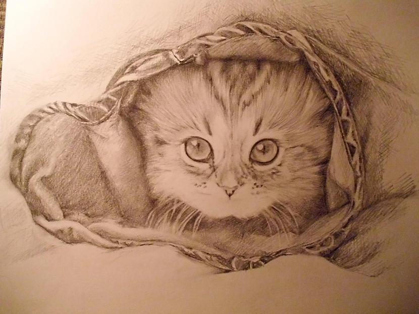 Kaķēns  otrais mēģinājums... Autors: Ostina Jauns zīmējums + 2013.gada darbi+senāki