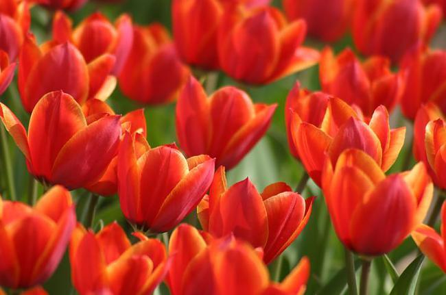 Izrādās scaronīs dienas... Autors: karamele1132 Svētki tuvojas- Kādēļ Starptautiskā Sieviešu diena ir 8. martā .Leģenda