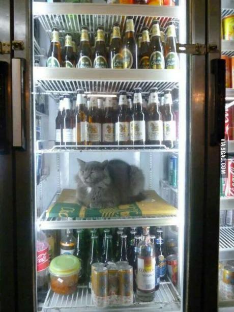Autors: hagisons112 Kā zināt ka ārā ir karsts?