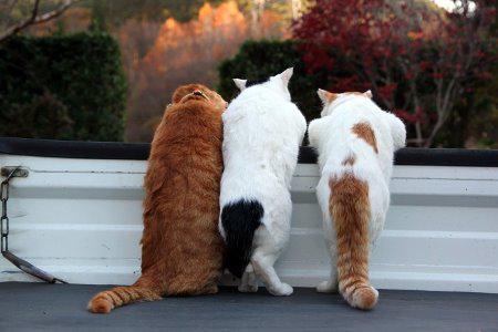 4 bdquoTu vari būt kaķu... Autors: kasītis no simpsoniem D Lietas, ko kaķi par sevi tev neatklās