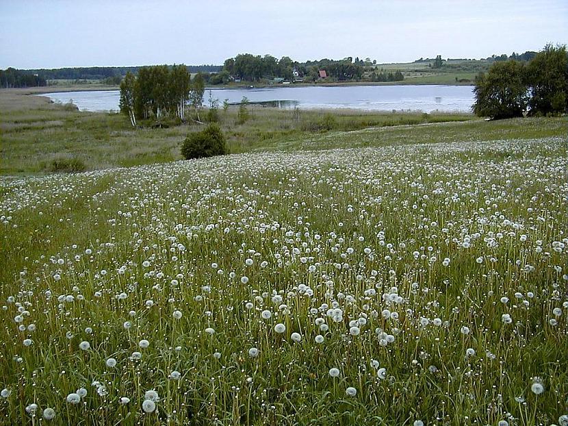 6Labākais nosaukums Jērkules... Autors: kriska14 Fakti par Latvijas ezeriem!