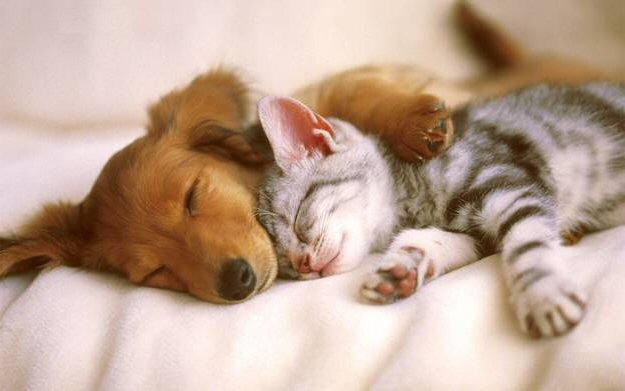 Kaķu un suņu deguni ir tik pat... Autors: Fosilija Lietas ,kuras tev ir jāzin par kaķi un suni.
