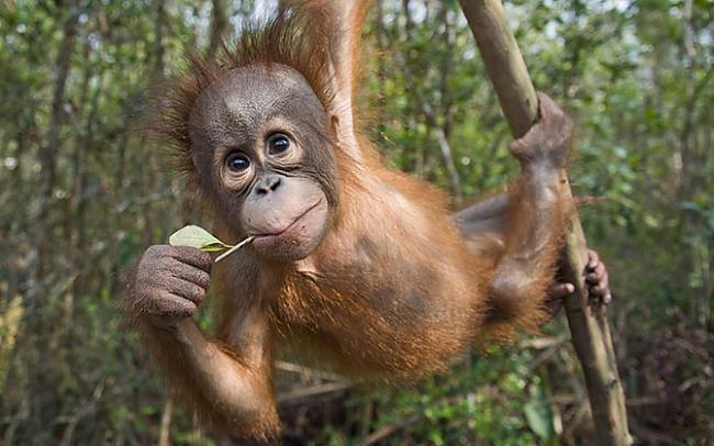 Autors: Fosilija Dzīvnieku bildes !