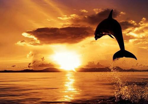 1 Delfīni dzīvo baros kur visi... Autors: kitucis123 Delfīni #Fakti . ♥