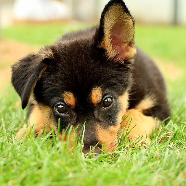 quotPuppy millsquot ir kucēnu... Autors: kaķūns Bēdīgas dzīvnieku dzīves lietas