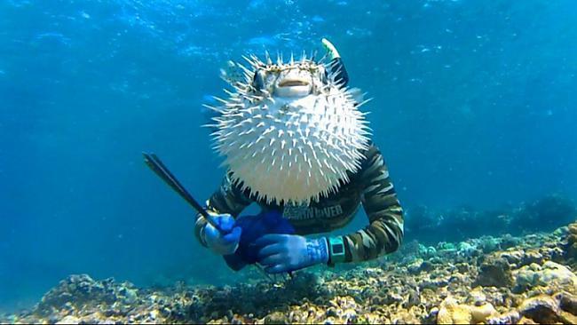 Autors: Fosilija 13 visu laiku smieklīgākās zemūdens fotogrāfijas