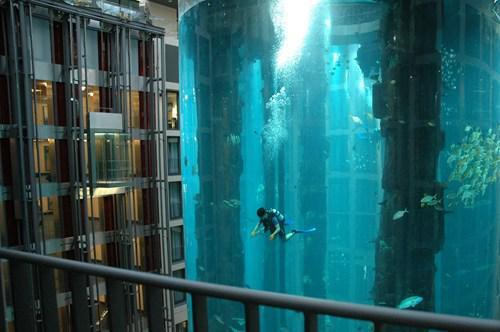 Nirscaronanas baseins kāda... Autors: kaķūns Nē, tas NAV fotošops!