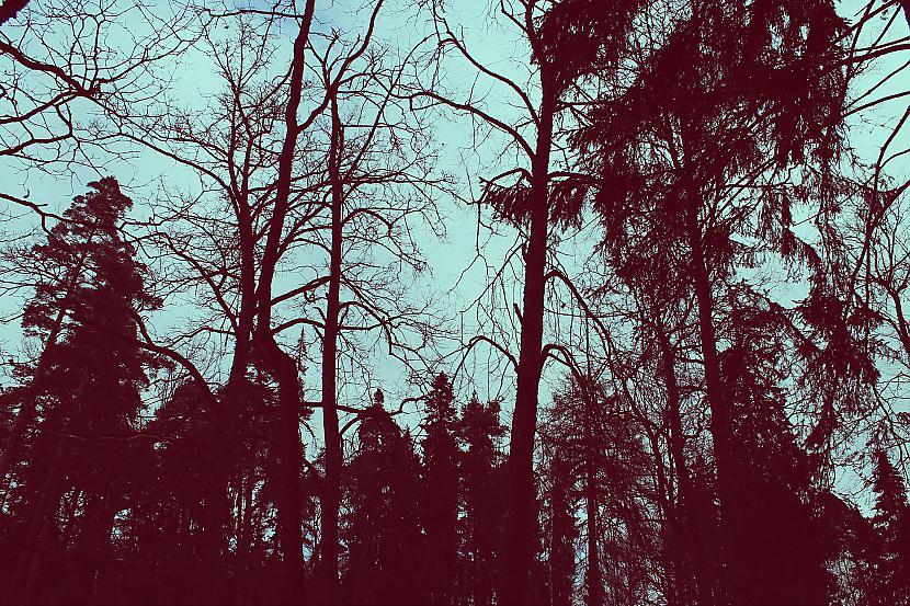 Autors: 3FckingUnicorns Spring in Latvia