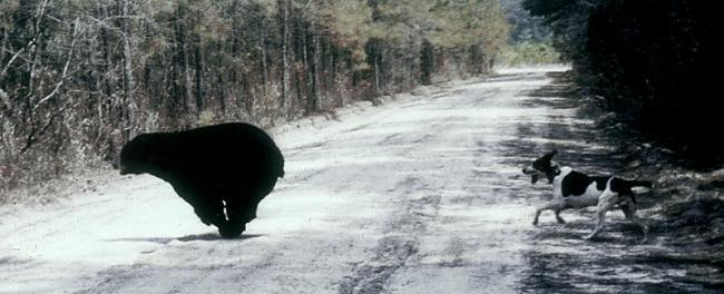 Lāči var sasniegt 64 kmh lielu... Autors: Kapteinis Cerība Interesanti Fakti Par LĀČIEM.