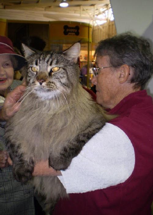 Meikūns  kaķu izstādes... Autors: Lords Lanselots Neko sev mincīši!!