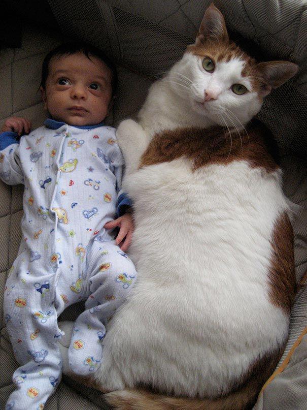 Sausā barība  9 kg nedēļāGaļa... Autors: Fosilija Kaķi, kaķi ks,ks,ks,ks
