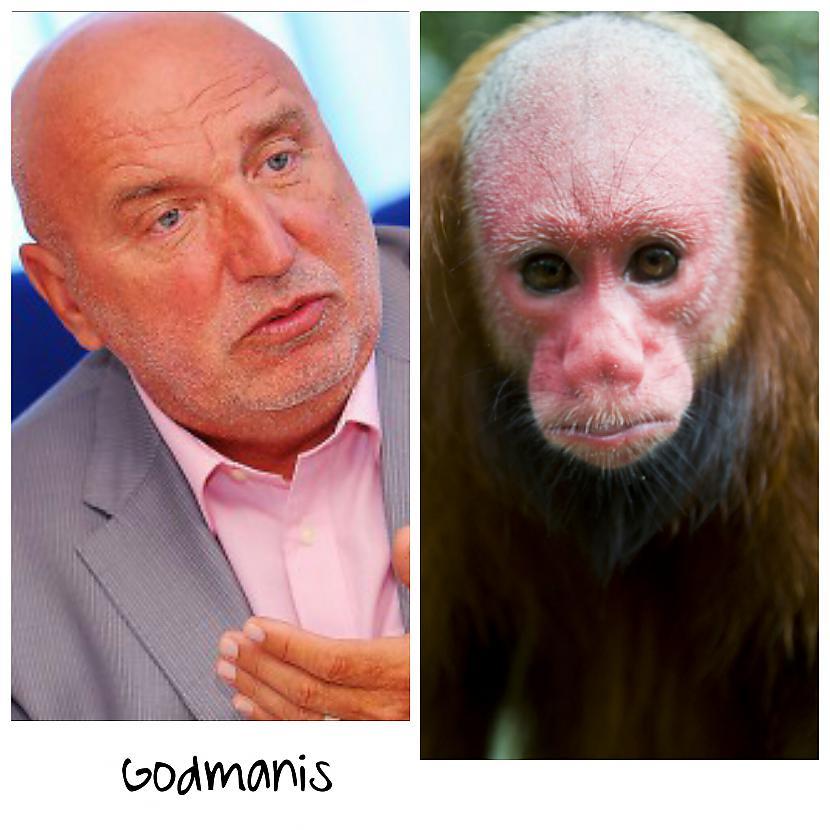 Ivars Godmanis  Bijušais... Autors: ghost07 Latvijas politiķi vs pērtiķi (Līdzības)