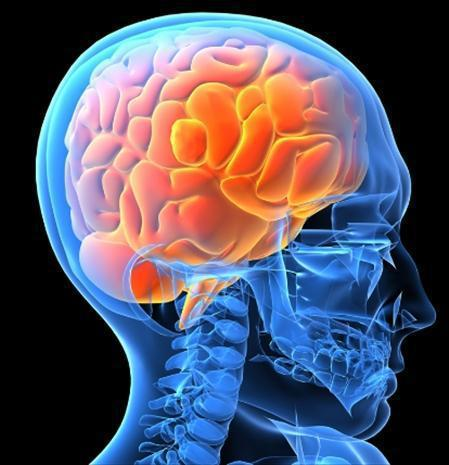 Smadzenēs ir 80  ūdens Autors: paulabogdanovica Interesanti fakti
