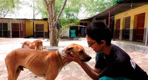 Autors: 3L3KTR1C0 Neticams stāsts par klaiņojošo suni, kuram bija briesmīga nieze