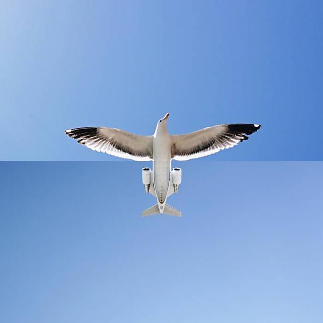 Autors: Sulīgais Mandarīns Photoshop māksla?