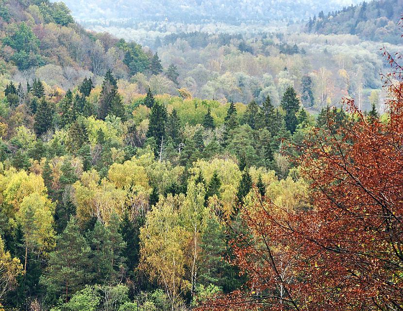 Mums ir plascaronākie meži Mēs... Autors: MJ Lover Kāpēc, Latvija ir pati labākā?