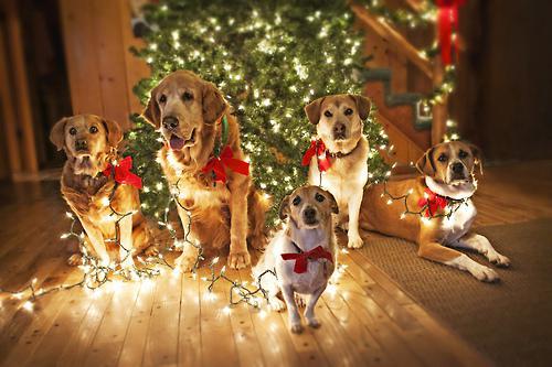 Interesants pētījums 7 no 10... Autors:  Kaķītis  Fakti  Par Ziemassvētkiem
