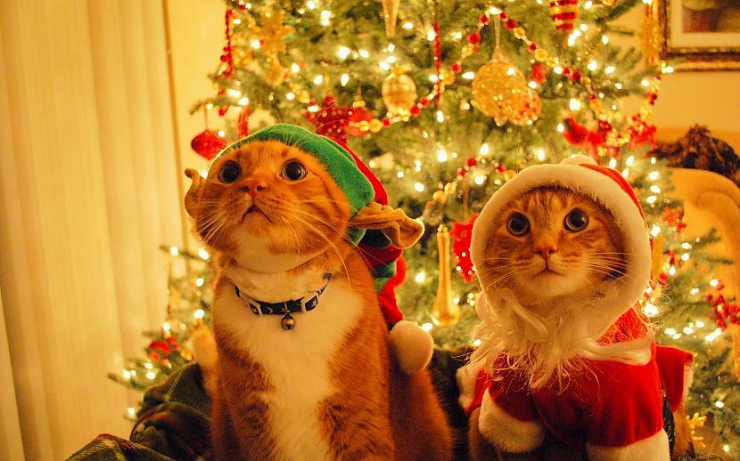 Kā jaukākās Ziemassvētku... Autors: amonty Un ko Tu vēlies Ziemassvētkos?