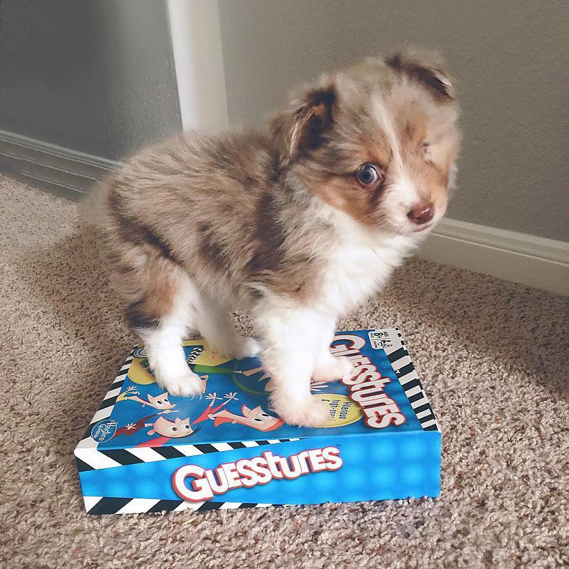Scaronī mazā mīluļa vārds ir ... Autors: matilde Vīrietis, kurš redz tikai ar vienu aci, nopirka suni, kuru neviens negribēja!
