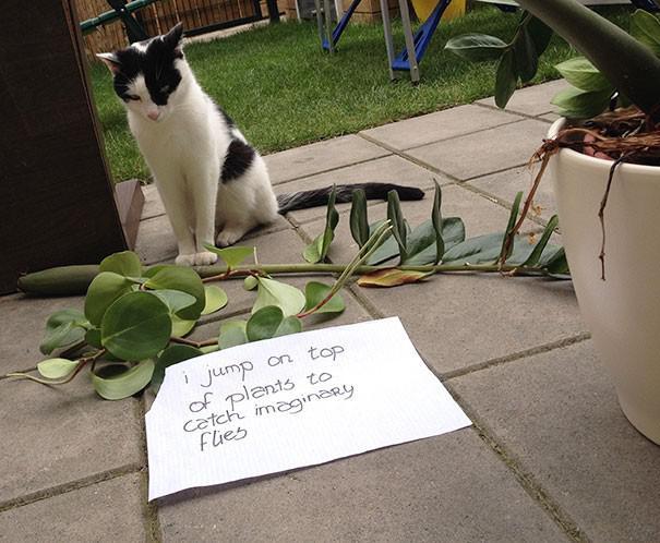 Autors: ilvuciss 25 kaķi atzīstas savos nedarbos. Un mazliet nožēlo!