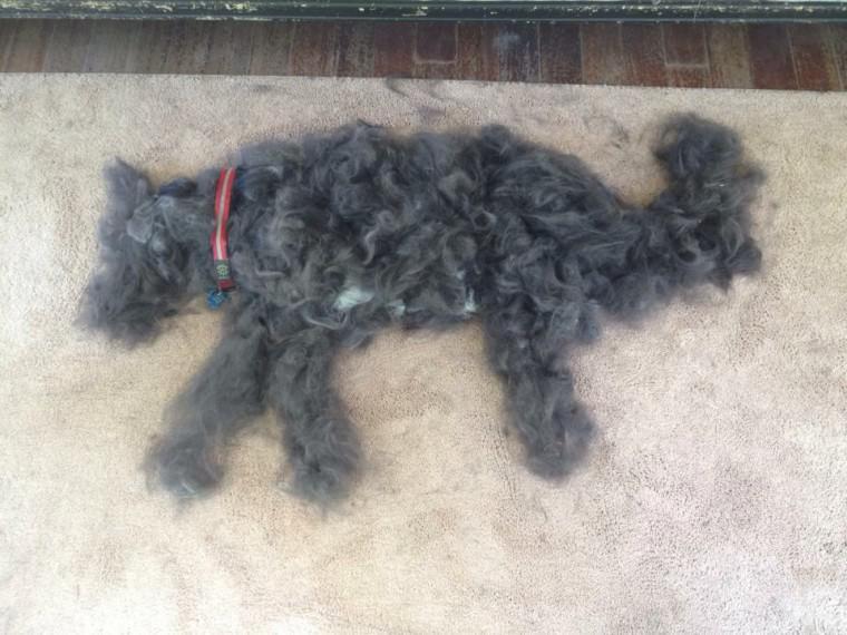 Autors: ilvuciss 1 suns + ķemme = 2 suņi :D