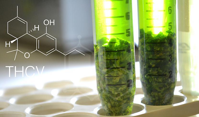 THCvTetrahidrokanabivarins... Autors: PkerLv Top 10 kanabinoīdi