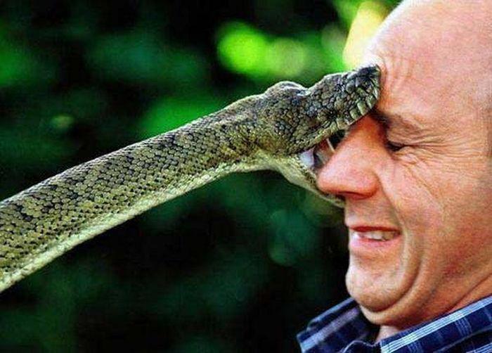 Čūskas dzīvo varteikt visur... Autors: Kapteinis Cerība Interesanti fakti par ČŪSKĀM