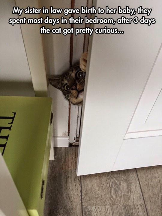 Autors: Slinkaste Suņu un kaķu fun pics mix
