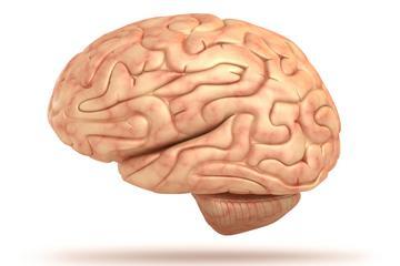 1 Cilvēka smadzenēm nav nervu ... Autors: Čarizards 10 fakti par cilvēka smadzenēm.