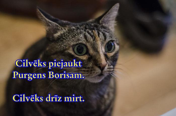 Tev ir kaķis2014 gadā veikts... Autors: Moonwalker 8 jocīgas pazīmes, ka esi gudrāks nekā pārējie. Iespējams…