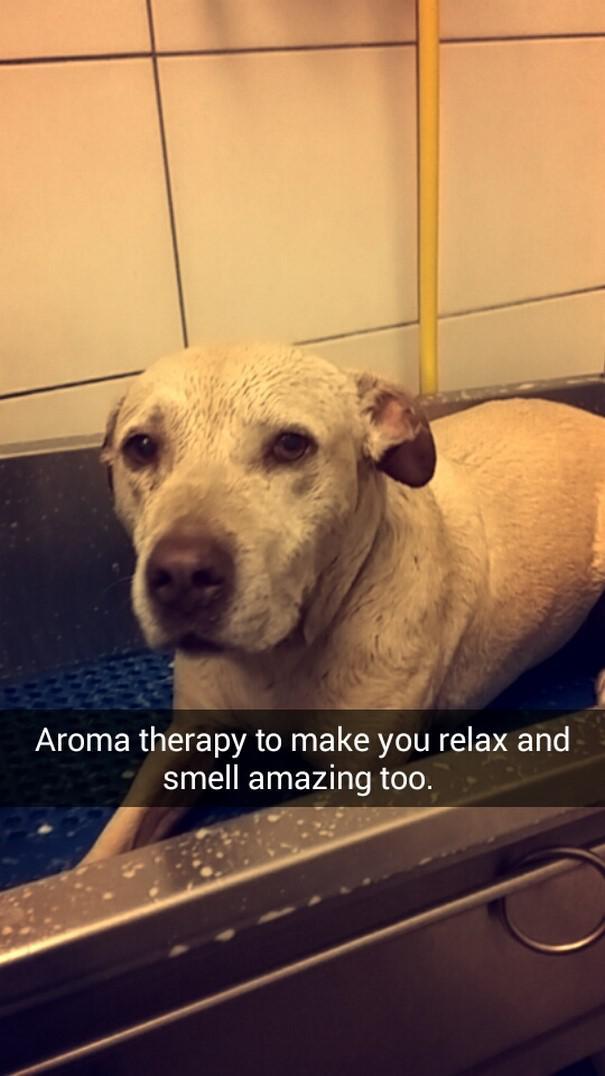 Aroma terapija lai tu... Autors: matilde Šī sieviete iemūžināja sava mirstošā suņa pēdējo dienu