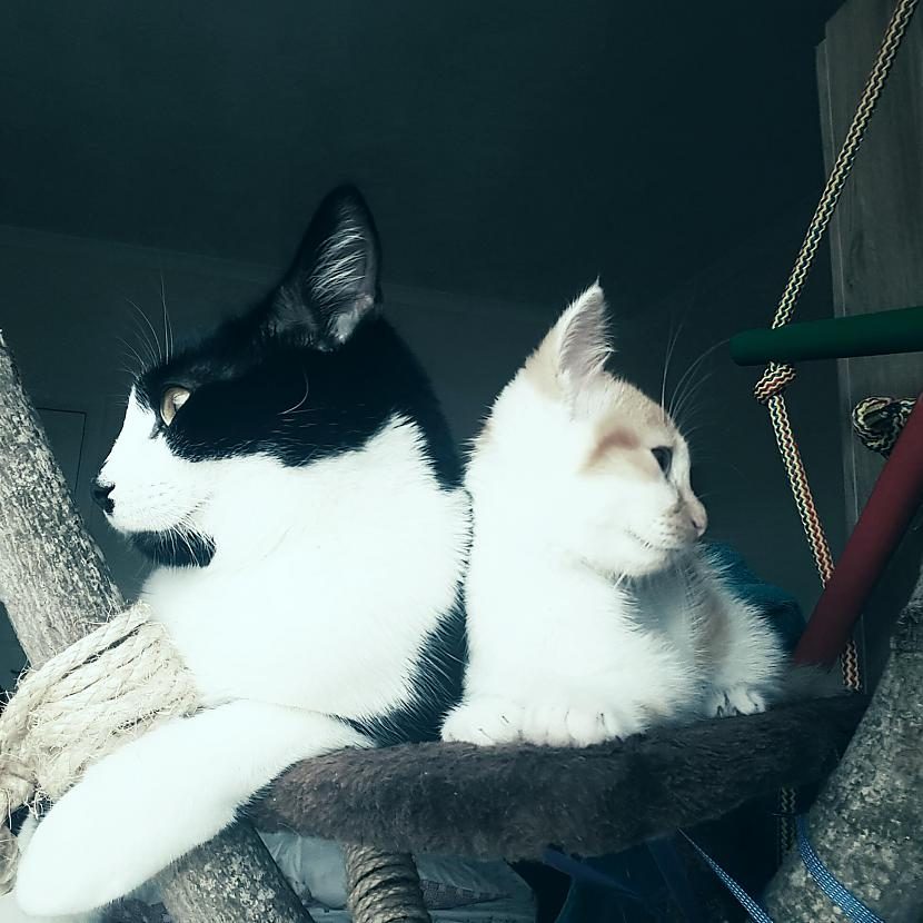 We are always playing together Autors: kristen Two happy UK cats