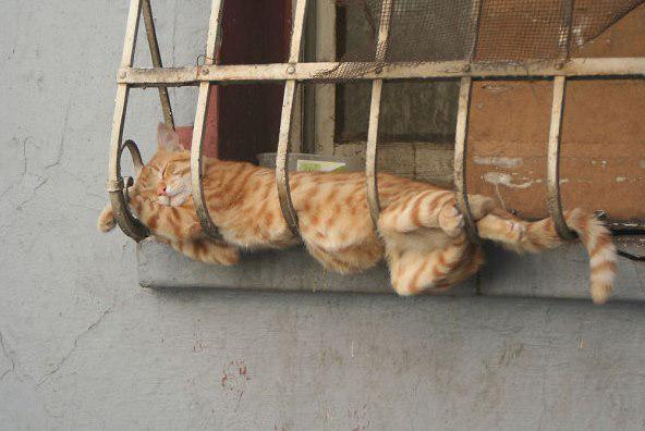 Atpūta svaigā gaisā Autors: Ciema Sensejs 20+ kadri, kuri pierāda, ka kaķi var gulēt pilnīgi visur
