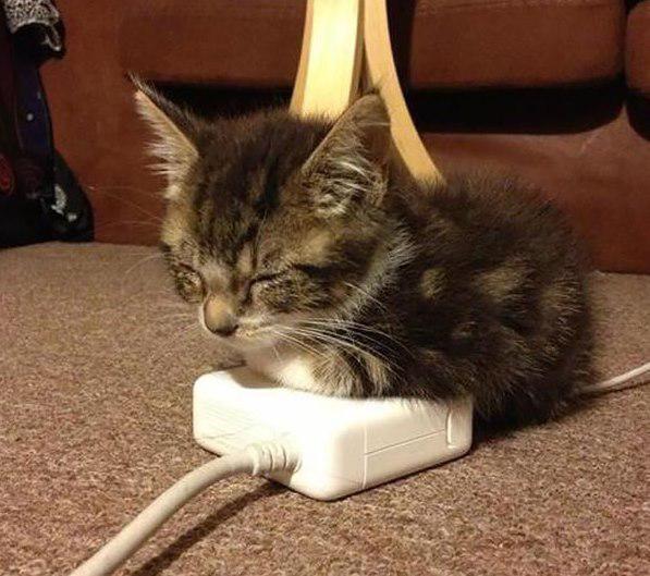 Siltākā detaļa Apple datoram Autors: Ciema Sensejs 20+ kadri, kuri pierāda, ka kaķi var gulēt pilnīgi visur